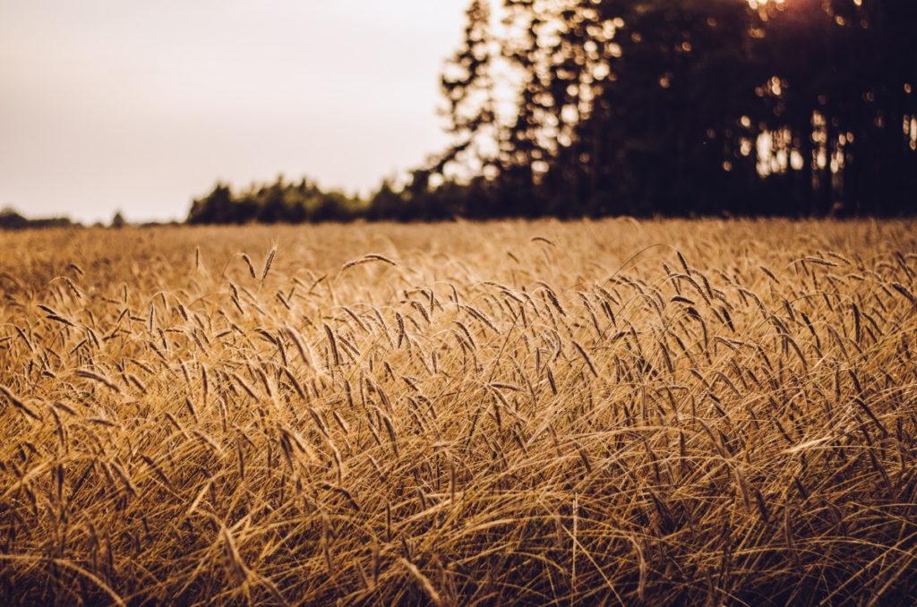 August Newsletter Harvest