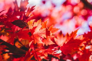 August Newsletter - Autumn Leaves