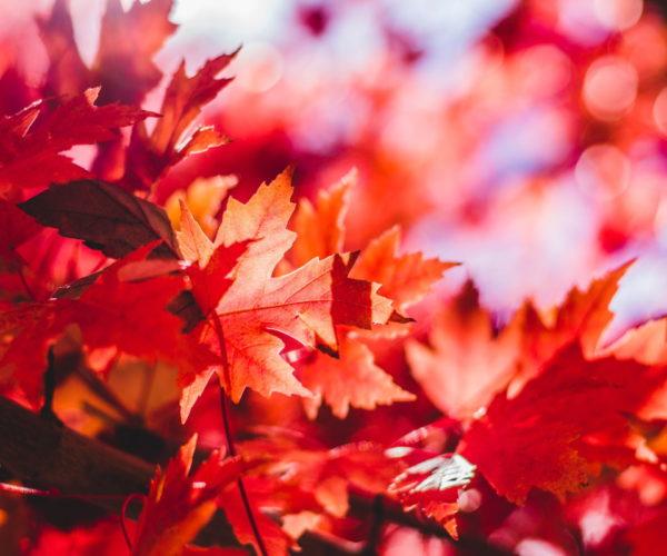 August Newsletter - Autumn Leaves